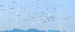 Monitoring bird mortality at operational wind farms